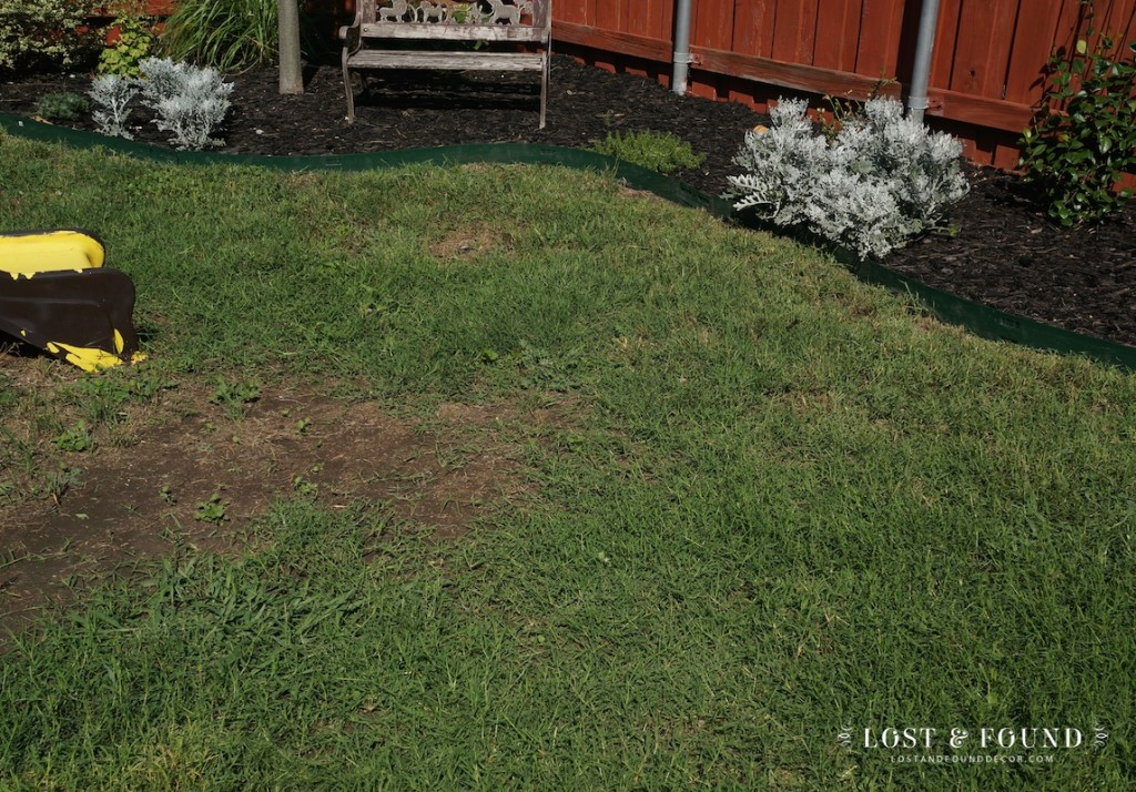 how to fill in bare spots in your lawn